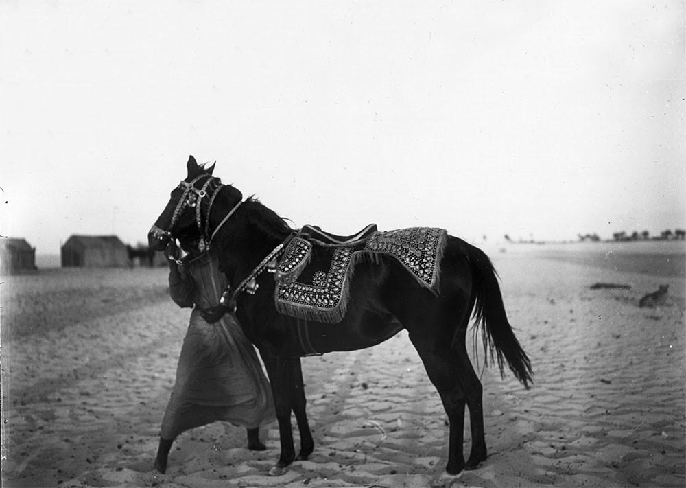 ربدان حصان الشيخ زايد بن خليفة